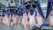 خاوازی: آرامش به بازار مرغ سراسر کشور باز میگردد