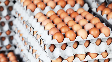 ناکارآمدی شبکه توزیع عامل گرانی تخم مرغ
