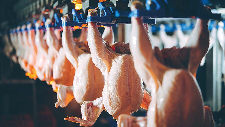 توزیع گسترده مرغ گرم ۲۴۹۰۰ تومانی از امروز در استان تهران
