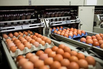 هر شانه تخم مرغ ۵۰ هزار تومان را هم رد کرد