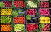 صادرات بخش کشاورزی ۲۶ درصد افزایش یافت