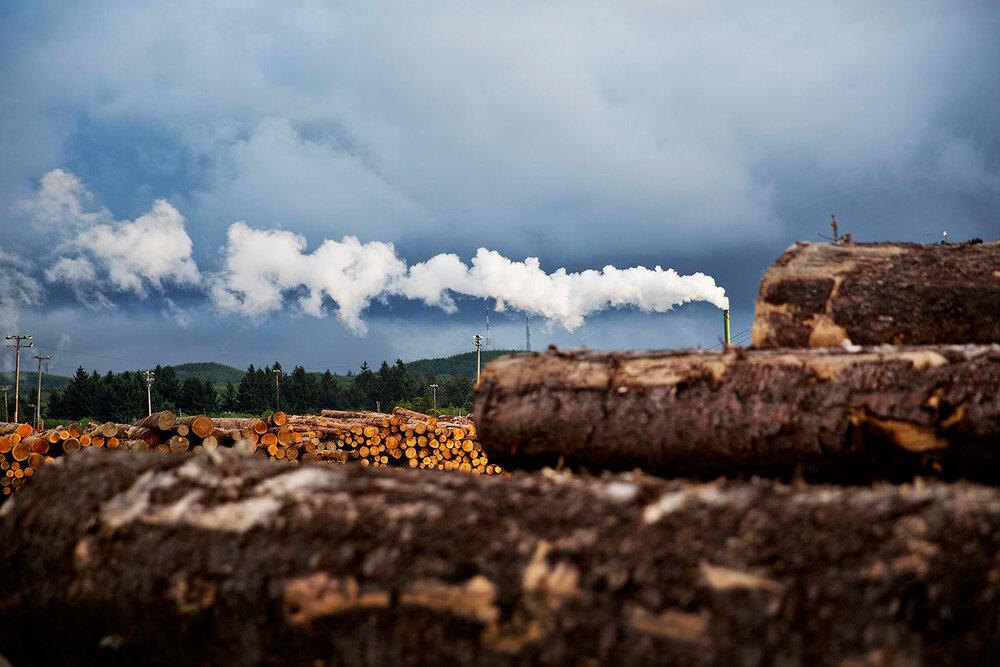 هدفگذاری ۴۰ هزار هکتاری زراعت چوب تا پایان امسال