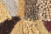 مسئولیت ثبت سفارش نهادههای دامی به وزارت جهاد کشاورزی واگذار شد