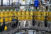 ظرفیت تولید روغن ۳ برابر نیاز کشور است