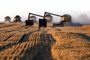 دستگاههای متولی، احتمال بروز بحران در بازار گندم را جدی بگیرند