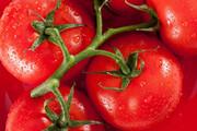 مجوز صادرات گوجه فرنگی به عراق صادر شد