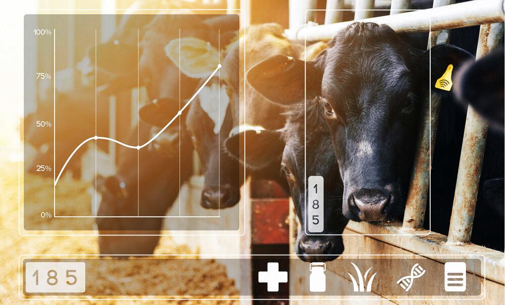 اندازهگیری شیر دامهای صنعتی با اینترنت اشیا