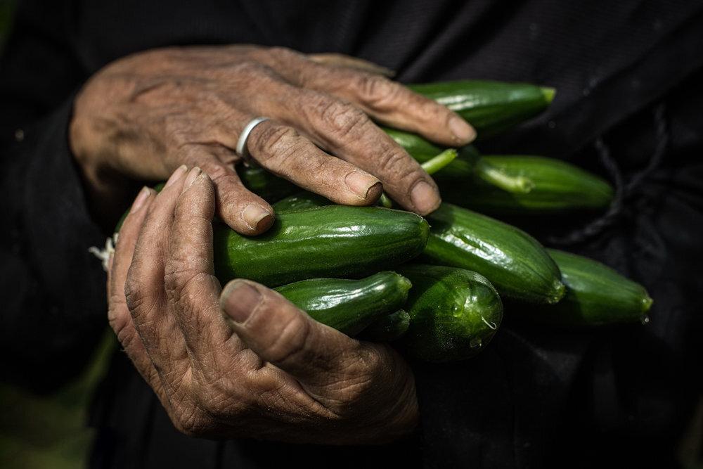 صنایع تبدیلی؛ احیاگر محصولات کشاورزی