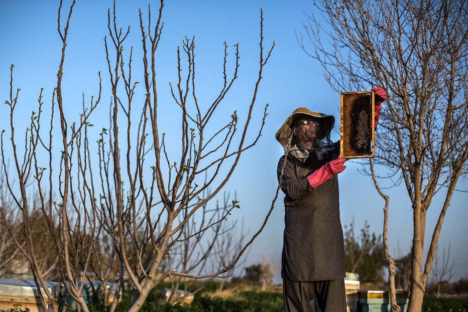 رتبه سوم دنیا برای عسل ایران