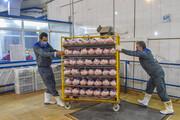 مجوز واردات مرغ افزایش یافت