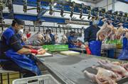 بیش از ۷ هزار تن گوشت مرغ گرم به بازار عرضه شد