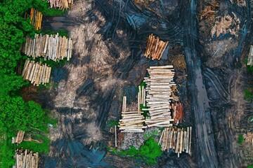 افزایش ۳۰ درصدی کشفیات قاچاق چوب