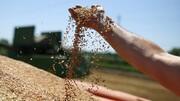 طرح تقویت امنیت غذایی به کمیسیون کشاورزی مجلس ارجاع شد