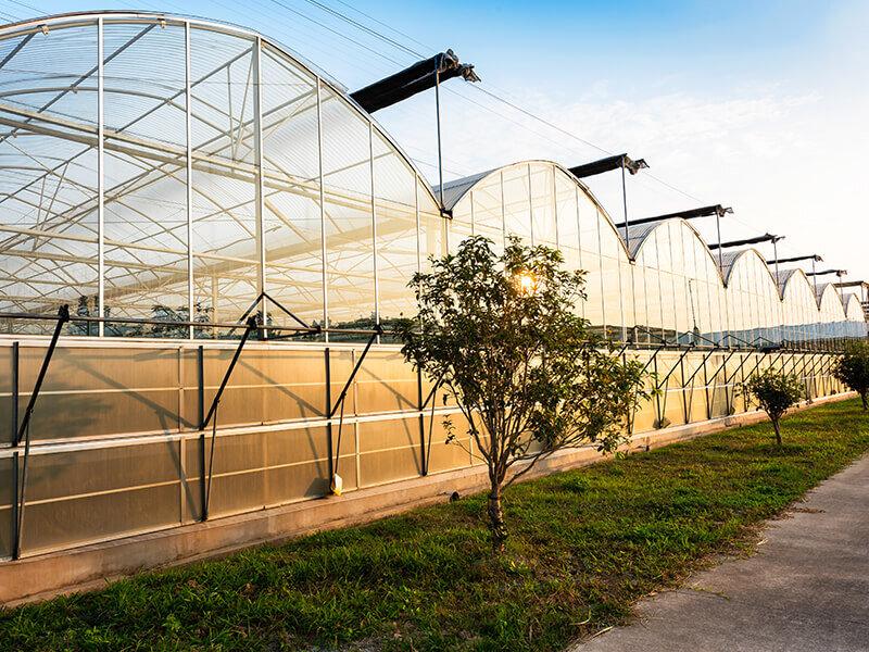 ۹۴ درصد اهداف توسعه گلخانه ای کشور محقق شد