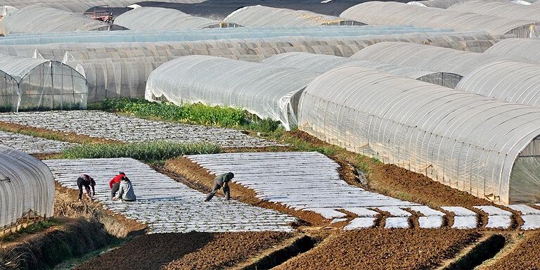 پرداخت ۳ هزار میلیارد تومان تسهیلات بانکی برای سازندگان گلخانه