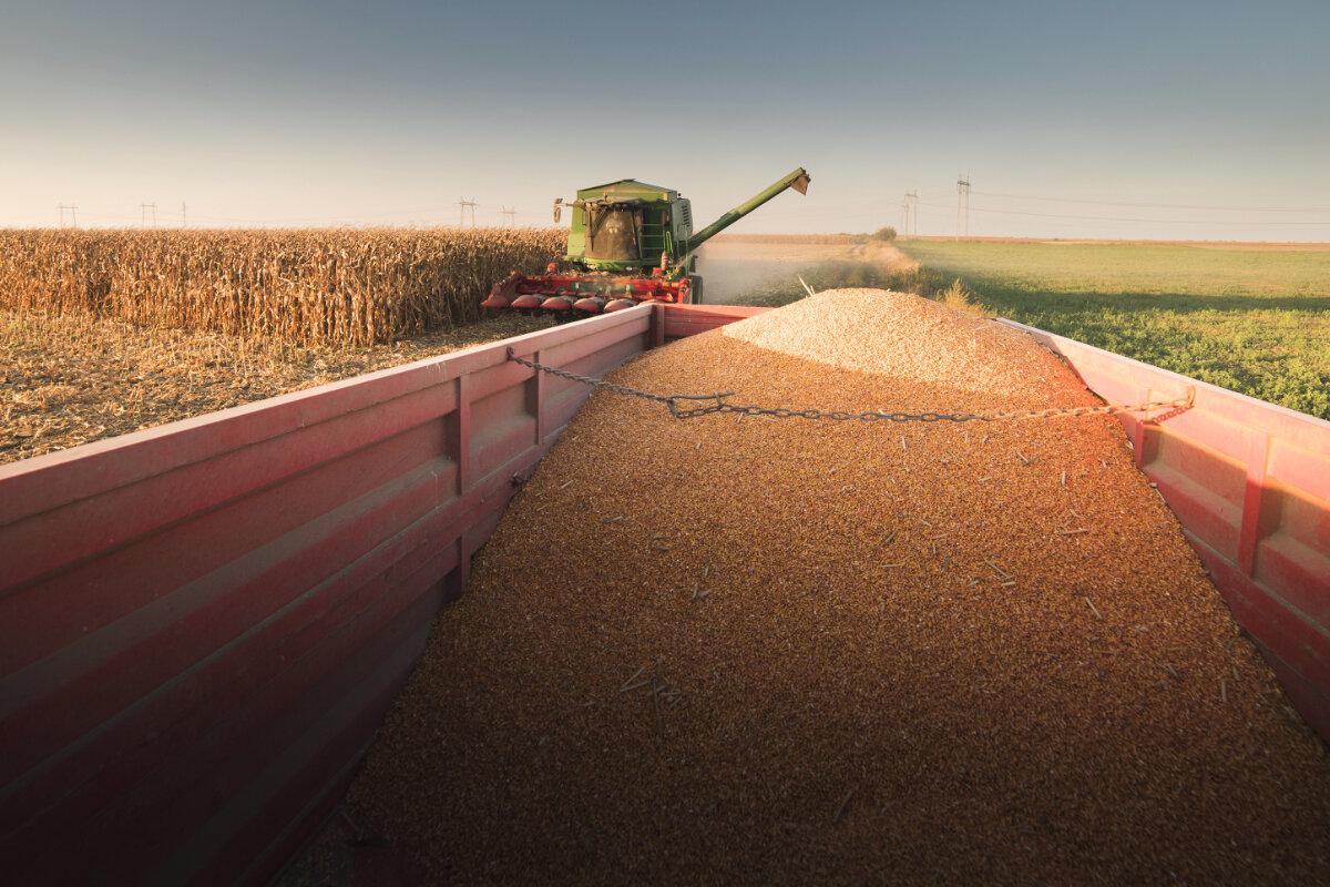 ظرفیت صادرات ۵ هزار تن بذر ذرت وجود دارد