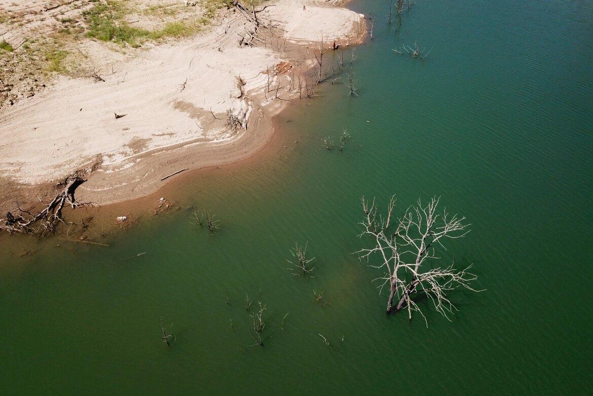 خشکسالی تولید علوفه را ۴.۵ میلیون تن کاهش داد