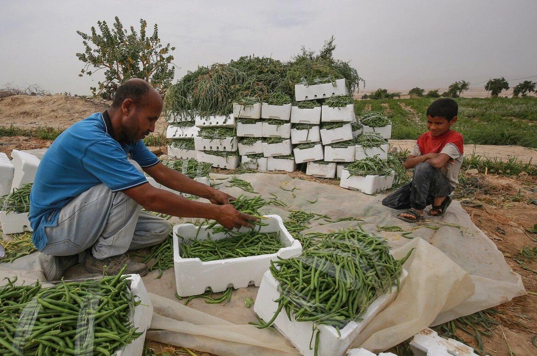 ۳۵ درصد محصولات کشاورزی به ضایعات تبدیل می شود