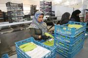 بنیاد برکت در مناطق محروم استان کرمان ۷۵۰۰ شغل ایجاد کرد