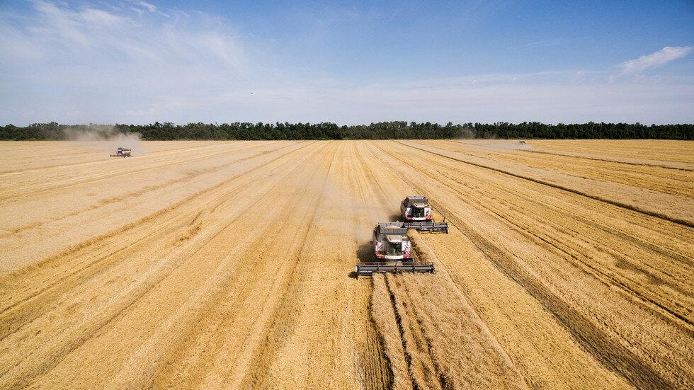 معرفی ۱۵ رقم محصول زراعی جدید دیم