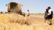 قیمت جهانی مواد غذایی افزایش یافت