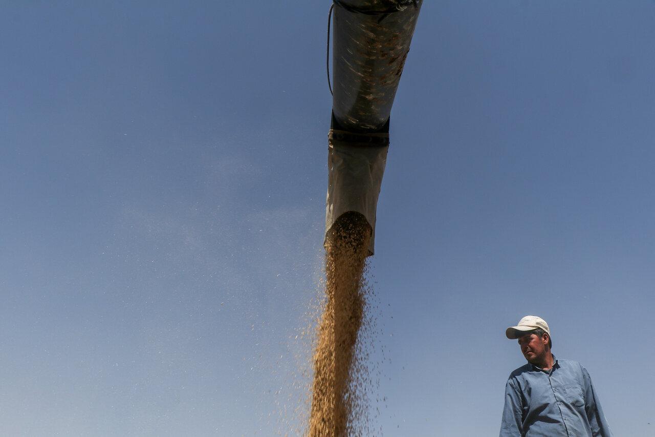تسهیلات ۱۵ هزار میلیاردی برای خرید تضمینی محصولات کشاورزی