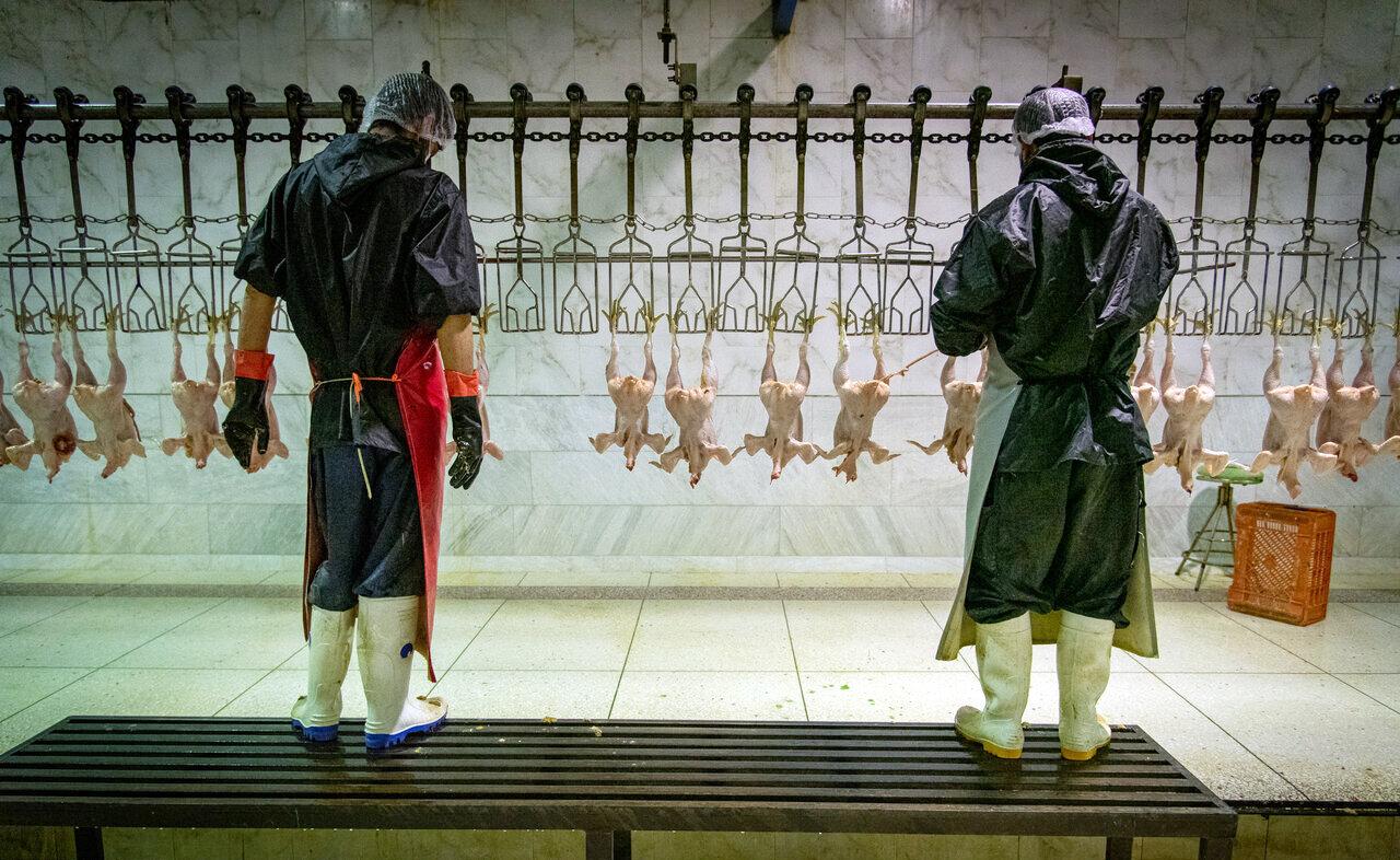 واکنش  رئیس هیات مدیره پرورش دهندگان مرغ به افزایش نرخ