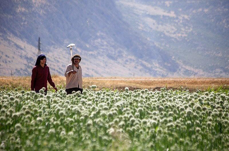 تخصیص ۲۰ درصد از اعتبارات برنامه حمایت توسعه علوم به کشاورزی