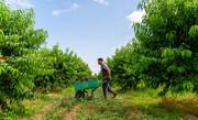 نمایندگان مجلس طرح موانع تولید کشاورزی را اصلاح کردند