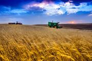 قیمت گندم ۷۵۰۰ تومان اعلام شد