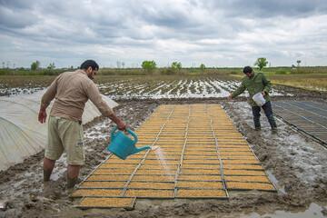 عرضه برنج در بورس؛ یک گام تا اصلاح بازار