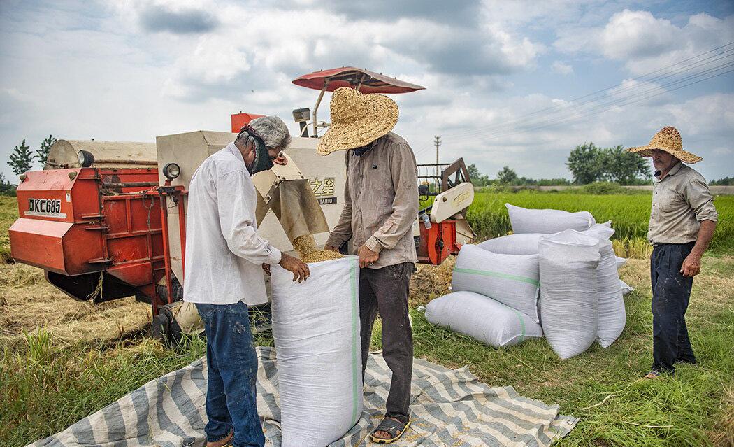 وزارت جهاد دست دلالان محصولات کشاورزی را قطع می کند