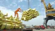 آغاز ترخیص ۱۵ هزار تن برنج
