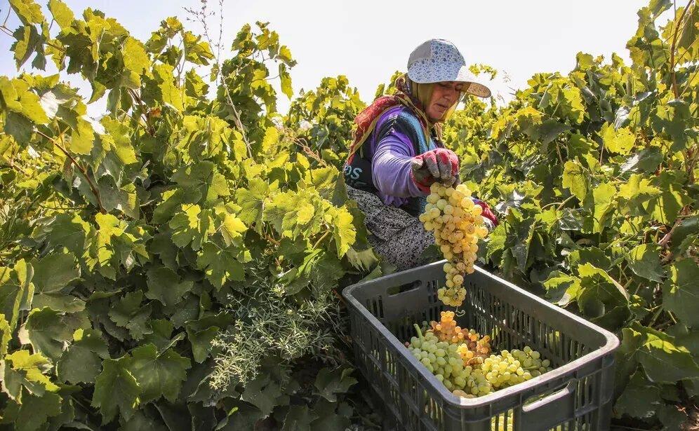 دلیل باقی ماندن سموم در محصولات کشاورزی چیست