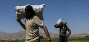 روسیه به دنبال واردات سیب زمینی ایران