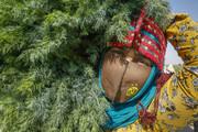 زنان روستایی و عشایری نقش محوری در تأمین امنیت غذایی دارند